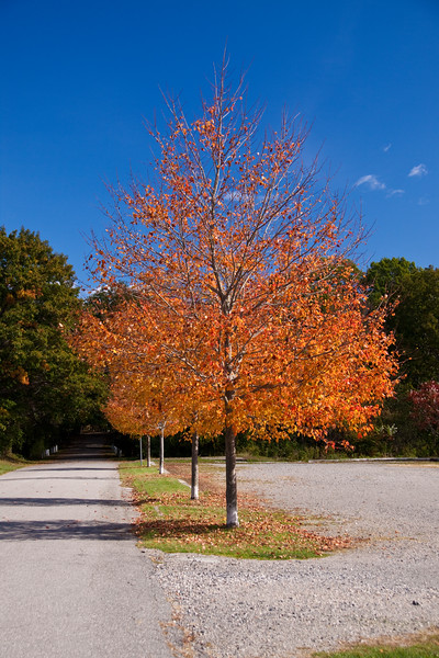 Autumn Color in Maine, at Fort Foster State Park in Kittery, Maine.