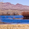 Marshy ponds at Bosque del Apache National Wildlife Refuge in New Mexico.