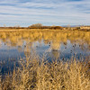 Landscape scene in Bosque del Apache National Wildlife Refuge in New Mexico.