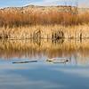 Landscape scene in Bosque del Apache National Wildlife Refuge in New Mexico.