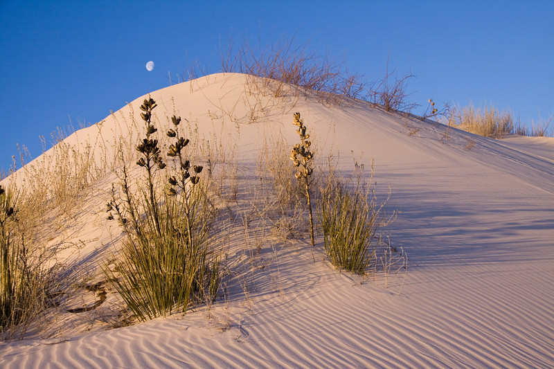Sand dunes at White Sands  National Monument in New Mexico on a cold morning in February. White Sands park is at the northern end of the Chihuahuan Desert in the mountain-ringed valley called the Tularosa Basin. Great wave-like dunes of gypsum sand cover 275 square miles of desert, the world's largest gypsum sand field.