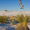Yucca plant at White Sands. White Sands National Monument is a United States National Monument that is in the southeastern region of the state of New Mexico. The monument contains the world's largest gypsum sand dune field -- 275 square miles of fine white sand, formed by the prevailing winds into large ridge-like dunes.