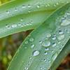 Rain drops on leaves