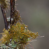 Close up of moss plant and rain drops in central Texas.