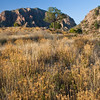 "Golden Light of setting sun on grasses in meadow near ""The Window"" in the Chisos Mountains in Big Bend National Park, Texas."