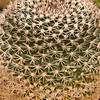 Cactus at Chihuahuan Desert Research Institute in Southwest Texas.