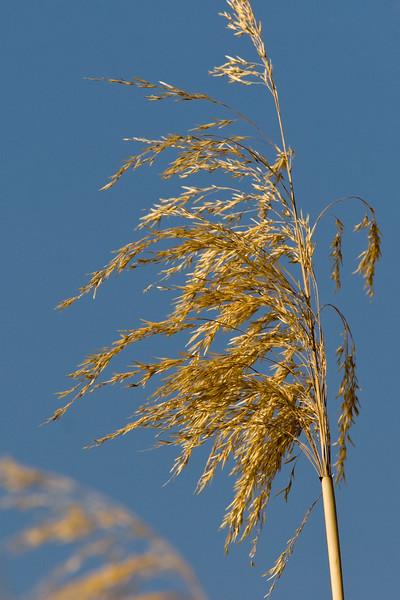 Grass stalk in Big Bend National Park