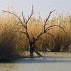 Pond near Rio Grande Village, bird sanctuary, Big Bend National Park, native grasses restoration area