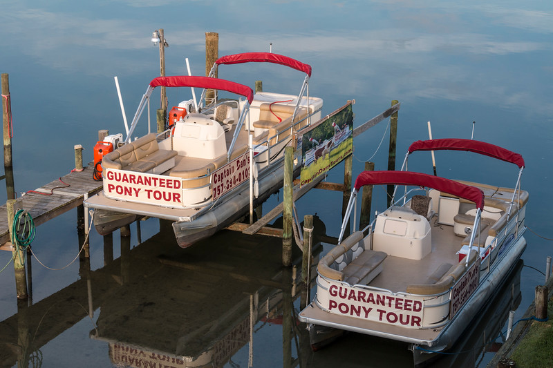 Tour Boats at Chincoteague Island are often focused on the Chincoteague wild ponies, located in the Chincoteague Wildlife Refuge on Assateague Island.