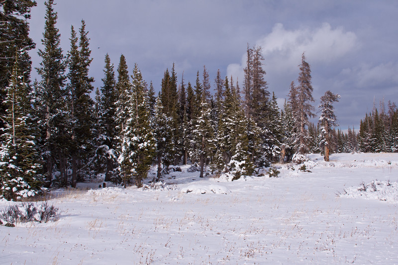 Early snow storm October in Medicine Bow National Forest along scenic highway 130 in southeastern Wyoming. The 29 mile Snowy Range Road, or Highway 130,  is also known as the 'Great Skyroad'.  It climbs sharply through lodgepole and spruce forests to Snowy Range Pass.  This pass sits at 10,847-feet, is the second highest in the state, and offers views of the Colorado mountains and alpine vegetation zones.  In the winter, this pass is closed, but continues to be popular with snowmobilers, cross-country skiers, and snowshoeing.