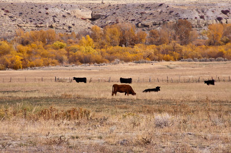 Autumn color and grasslands on Cattle Ranch in Wyoming along scenic road US 287.