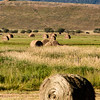 Hay bales and hay farming in southwestern Wyoming.