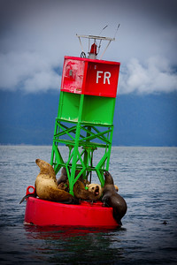 Seals on an Ocean Buoy