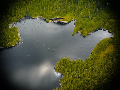 Alaskan Forest and Lake