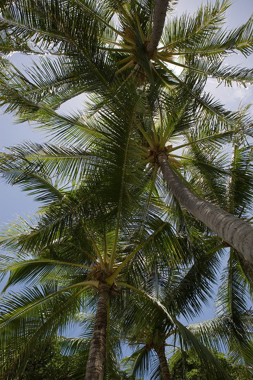 palm roof