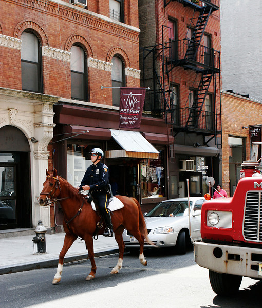 Cop on horseback at Mulberry St.