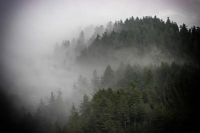 Haceta Head Forest