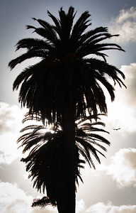Silhouette of Palm Trees at Dusk