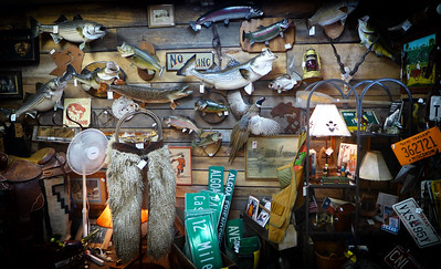 Wall of Fish