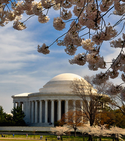Cherry Blossoms at the Jefferson Memorial