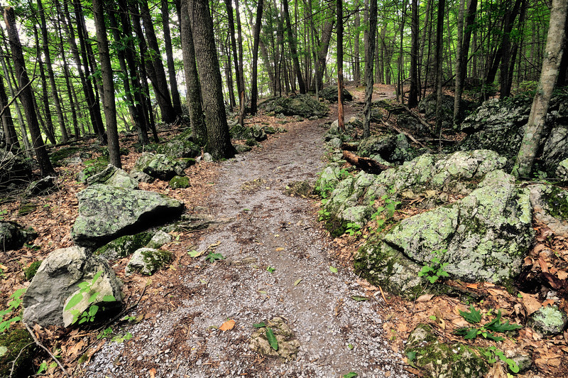 Seneca Rocks Trail WV