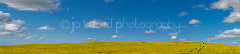 Canola (21 of 26)