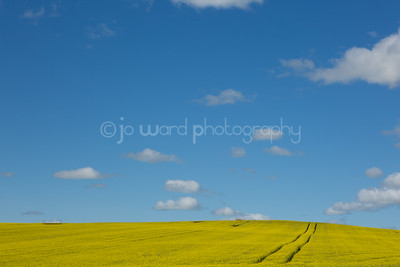 Canola (19 of 26)