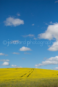 Canola (22 of 26)