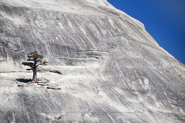 L18 Yosemite, California, USA