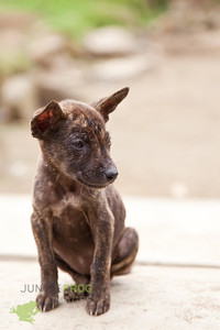 Tiny stray dog in Indonesia