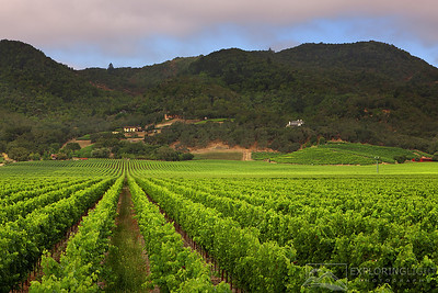 """WINE COUNTRY III""Sonoma Valley, California.Vineyards of wine country in the early morning light.© Chris Moore - Exploring Light PhotographyPURCHASE A PRINT"