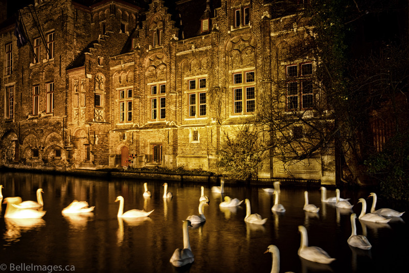 Night Swans