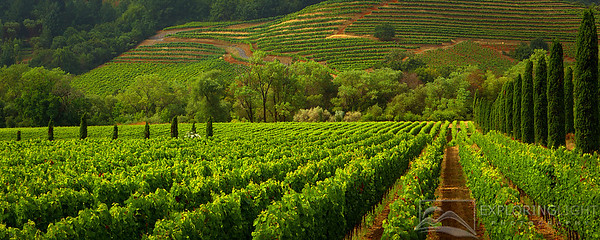 """WINE COUNTRY II""Sonoma Valley, California.Vineyards of wine country in the early morning light.© Chris Moore - Exploring Light PhotographyPURCHASE A PRINT"