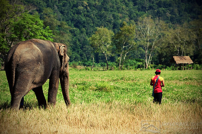 """THE CARETAKER""Northern ThailandAn elephant keeper leads his elephant home, Chiang Mai.© Chris Moore - Exploring Light PhotographyPURCHASE A PRINT"