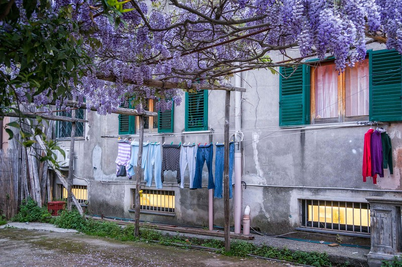 Wisteria scented laundry!