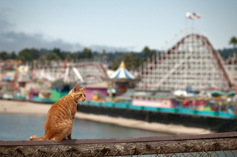 Santa Cruz | USA Roller coaster and a privileged-view cat