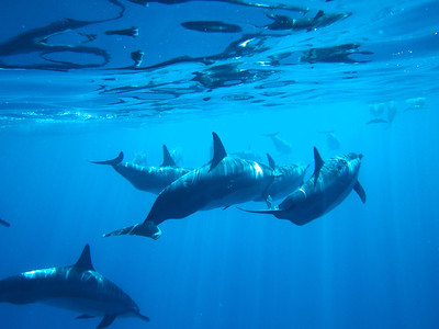 Spinner Dolphins West Coast of Oahu