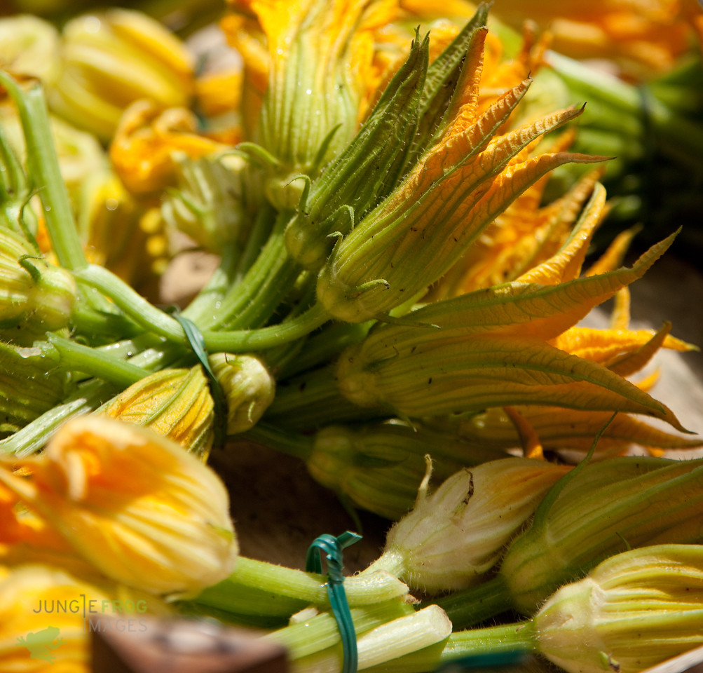 Fresh courgette flowers
