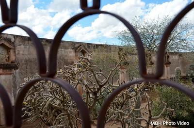 Tucson Garden