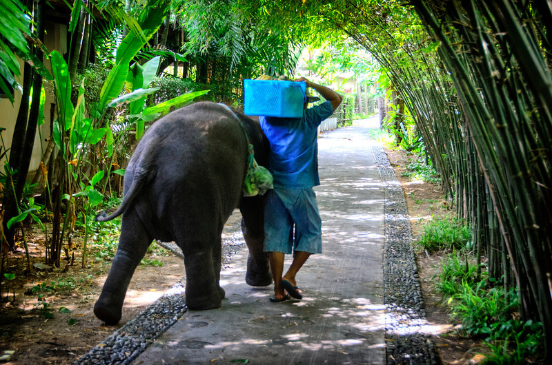 Elephant and Trainer