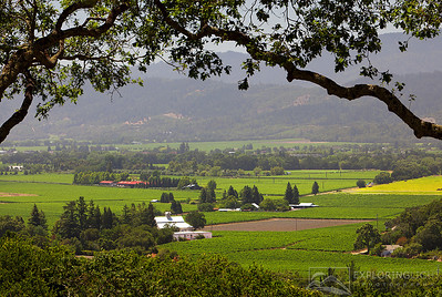 """WINE COUNTRY IV""Sonoma Valley, California.Vineyards of wine country in the early morning light.© Chris Moore - Exploring Light PhotographyPURCHASE A PRINT"