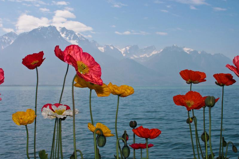 Montreux Lake Walk