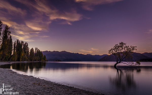 That Wanaka Tree Sunset