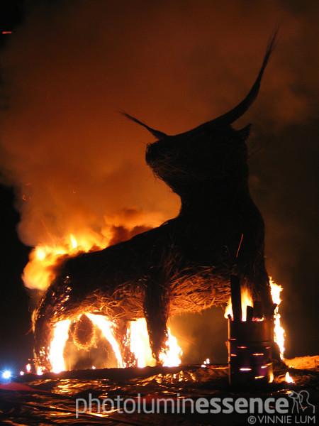 Catalan bull, Edinburgh, Scotland
