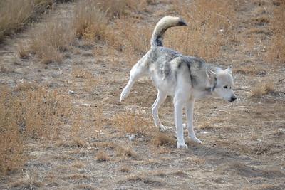 Wolf potty ;)