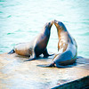 Sea Lion kiss!  San Francisco, California