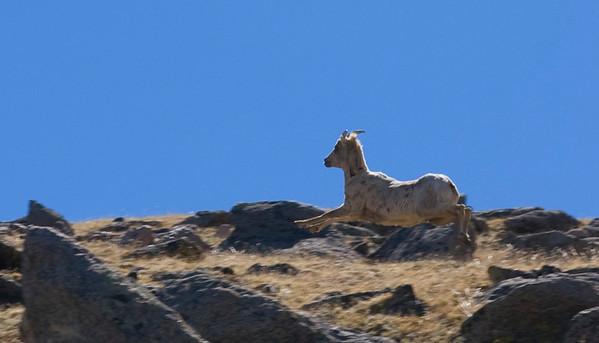 Billy Goat jump, Colorado