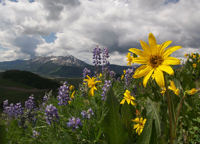 I love the Crested Butte Wildflower Festival, Colorado