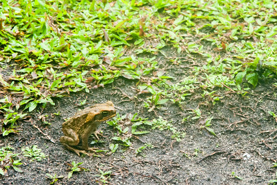 Then it rained for 2 days so I took lots of photos of frogs :)