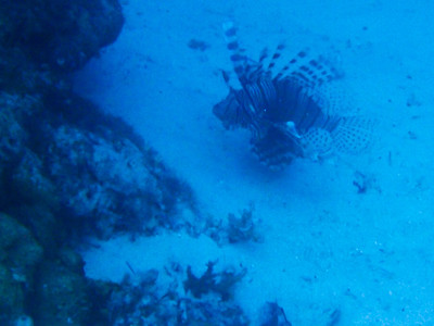 Please eat all Lionfish!